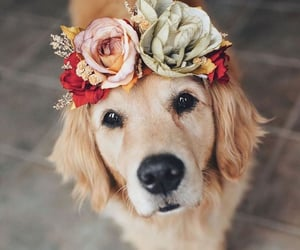 dog, flowers, and pet image