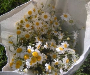 flowers, daisy, and aesthetic image