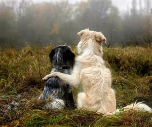 animals, best friends, and cutest image
