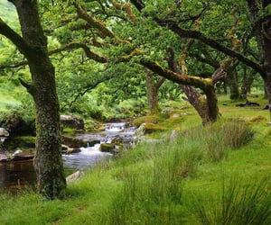 brook, trees, and grass image