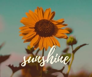 flower, happy, and Sunny image