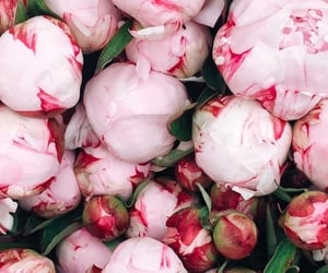 wallpaper, flowers, and peonies image