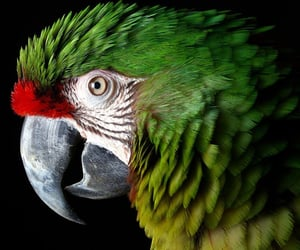 aesthetic, feathers, and green image