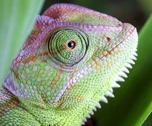 aesthetic, animals, and lizard image