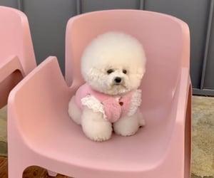 animal, dog, and pink image