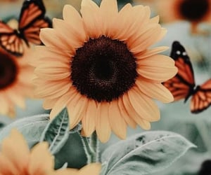 butterfly, sunflower, and flowers image