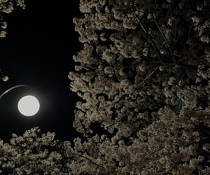 aesthetic, black, and cherry blossom image