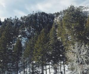 arizona, pine trees, and landscape image
