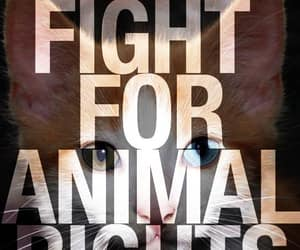 animal, go vegan, and animal rights activist image