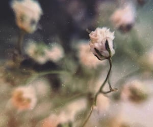 film, flowers, and grain image