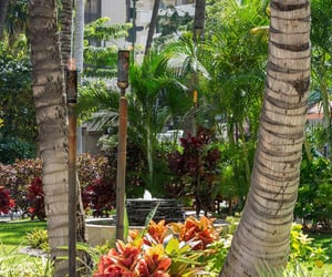 getaway, hawaii, and resorts image