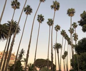 america, losangeles, and palm image