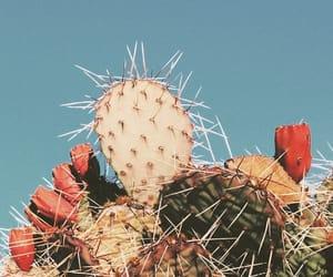 cactus, plants, and vintage image