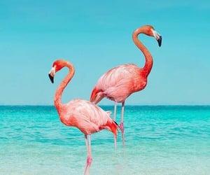 aqua, flamingos, and iphone wallpaper image