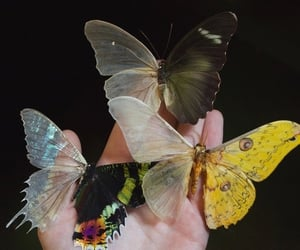 animals, black, and butterfly image