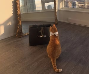 cat and chanel image
