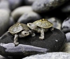 turtle, amazing, and couple image