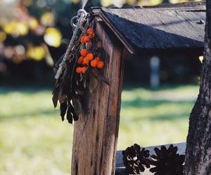 berry, birdhouse, and cones image