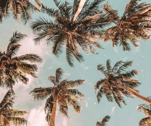 summer, palm, and palm trees image