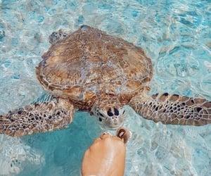 animal, cutie, and sea image