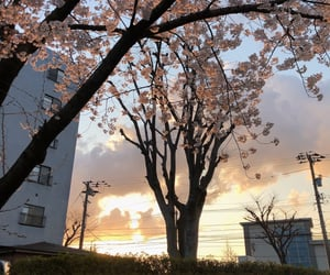 japan, 桜, and 🌸 image