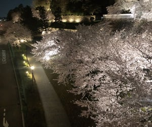 japan and 桜 image