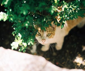 adopt, animals, and pets image