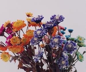 colors, flower power, and flowers image