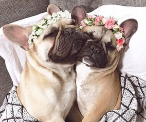 pug and puppy image