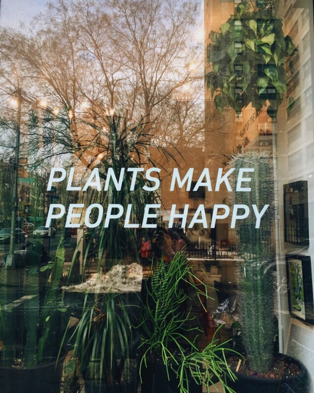 article, plants, and vegetarianism image