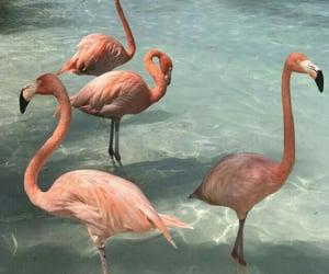 flamingo, pink, and aesthetic image