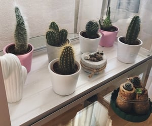 cactus, decoration, and home decor image