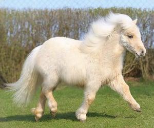 horse, my little pony, and pony image