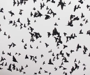 animals, black, and fly image