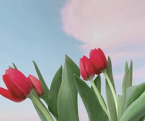 flowers, tulips, and aesthetic image