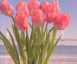 flowers, tulips, and sea image
