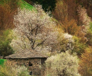 blossom, bulgaria, and spring image