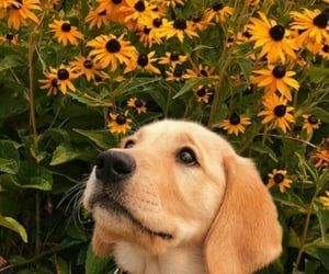 dog, puppy, and flowers image