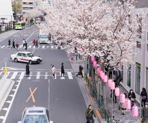 japan, sakura, and city image
