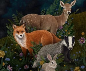animals, badger, and botany image