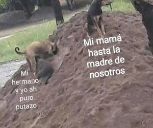 familia, hermano, and meme image