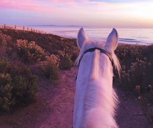 horse, pink, and beach image