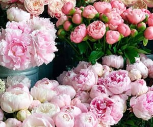 beautiful, pink peonies, and bouquet image