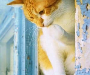 meow, shabby chic, and cute cats image