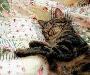 animals, kittens, and kitties image