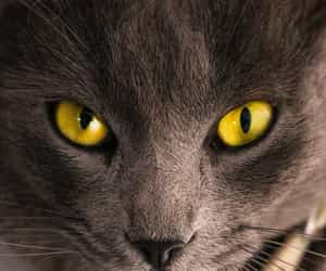animals, cat, and cat eyes image