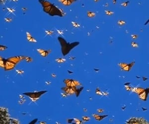 aesthetic, butterflies, and grunge image