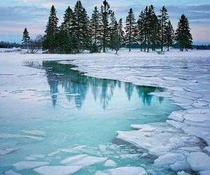 ice, winter, and tree image