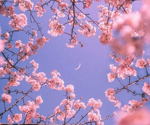 nature, photography, and pink aesthetic image