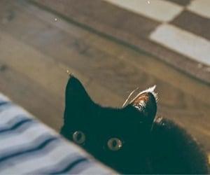 adorable, animal, and pet image